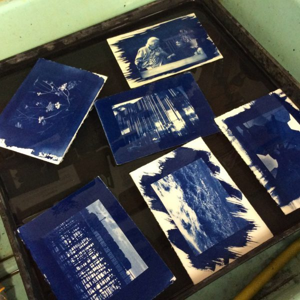cyanotype photography 2