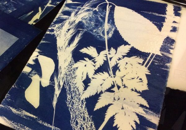 found cyanotypes