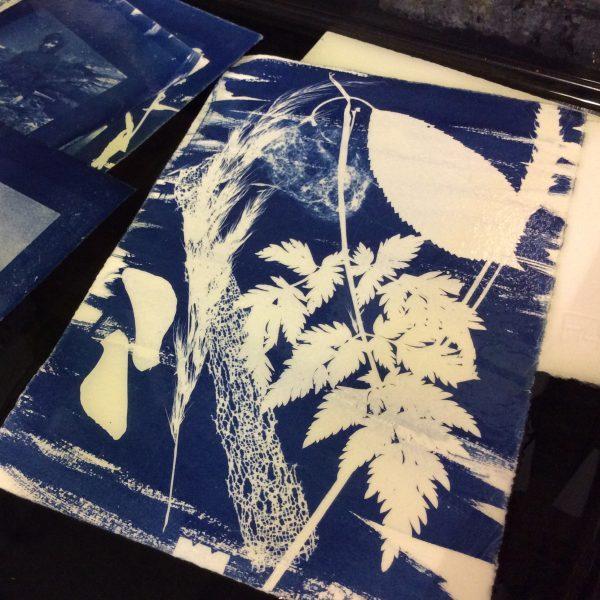 found cyanotypes